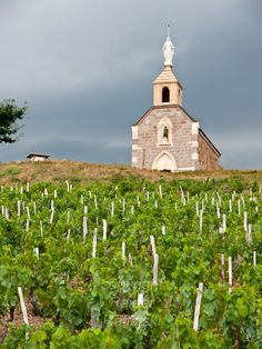 "France, FRA, Département Rhone, Beaujolais, Fleurie, 2009Jul23: The chapel ""La Madone"" stands above the renowned Beaujolais vineyards of Fleurie."