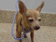 Heartbreaking: 3 tiny dogs tried so hard to protest owner from dragging them into Miami shelter • Pet Rescue Report