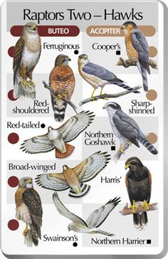 Types of Feet in Birds Central