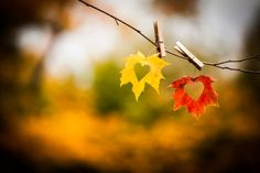 autumn sayings - Google Search