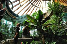 Food forest inside an Earthship.