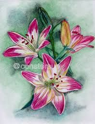 Image result for color pencil flowers