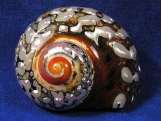Beautiful exterior of an african turbo hermit crab shell.