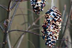 Vogelfutter selber machen - Vogelfutter Zapfen DIY