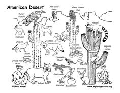 Draw An American Desert Drawing Lessons For A Whole PDF Exploringnatureorg Graphics Desertpdf