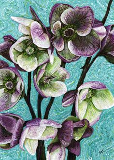 Roz Edwards  Painting of Hellebores http://artycraftythings.blogspot.co.uk/2012/04/floral-painting-hellebores.html