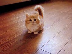 cat # birthday cat # cats # cute