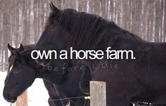 All I ever wanted was a horse.