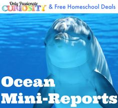 FREE Ocean Mini Reports for kids in 2nd-4th grades!