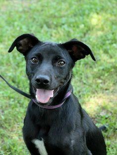 Questa cagnetta bella e' stata adottata! / This pretty pup was recently adopted!