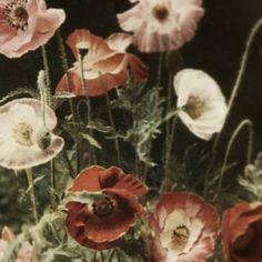 .@Nøëlle Maline | ... Poppies. | Webstagram