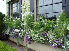 Many ready made window boxes are sized more to be convenient to load into your car, than convenient for good plant growth.  Undersized boxes are the devil to keep watered, once the plants have rooted in well.  These boxes are 11″ wide and 16″ tall-plenty of room for a soil mass that will retain moisture evenly, and allow for root growth.  A window box that is 8″ tall and 10″  long will need succulents, as they do not root deeply, and they are happy in dry soil.
