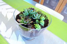 Found this at H is for Handcraft website. Awesome tutorial on homemade terrariums!