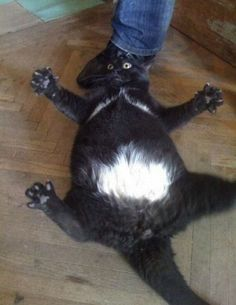 This is so funny! 29 Cats That Forgot How To Cat What are you doing, cats? How did this happen?