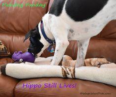 Monday FunDay - Hippo Lives!
