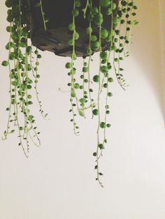 String of pearls.