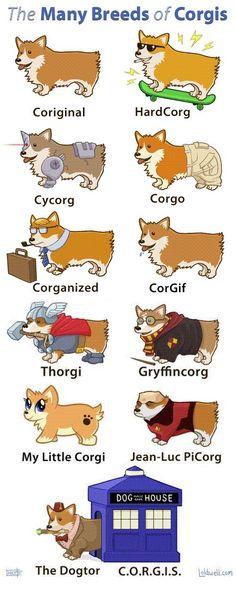 corgis fun | Funny Corgi