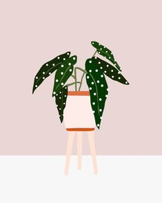 Buying Plants Online - Best Stores House Plants Tips Apartment Therapy Buy Plants Online, Buy Art Online, Online Check, Plant Painting, Plant Drawing, House Plants Decor, Plant Decor, Gouache, Plant Illustration