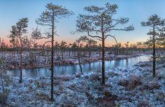 Морозная заря. Север Ленинградской области. Автор фото – Федор Лашков: nat-geo.ru/photo/user/27510/
