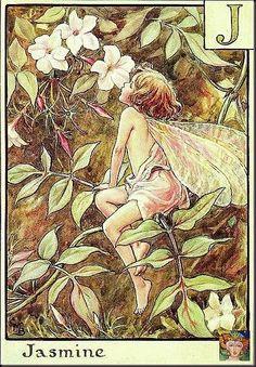 The Jasmine Fairy by Cicely Mary Barker