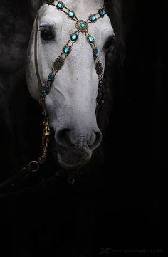 Love this bridler.  Gosia Makosa equine art and photography. Like turquoise jewelry!