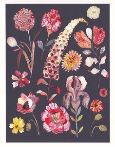 Botanicals - Archival Print by Michelle Morin Art Floral, Motif Floral, Art And Illustration, Botanical Illustration, Botanical Drawings, Botanical Prints, Botanical Flowers, Impressions Botaniques, Illustration Botanique