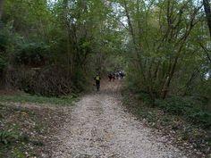 Il dog walking è anche attività sportiva in mezzo alla natura