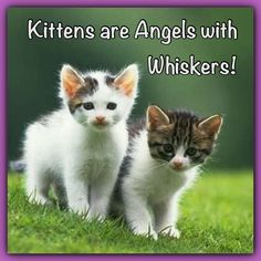 Kittens are Angels with whiskers...