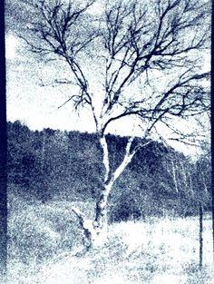 Tree portrait — w-david · Lomography