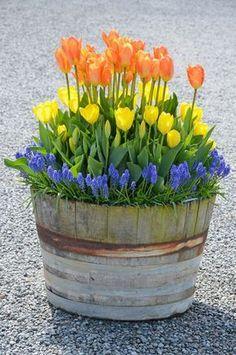Container Gardening with Bulbs #garden #gardening #dan330 http://livedan330.com/2015/04/10/container-gardening-with-bulbs/