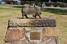 """Puppy In Toowoomba  """"Puppy"""" led the Toowoomba Thistle Pipe Band proudly during local parades for years. For his service, he received a small monument in the town's park. The moral? Australians loves feistiness."""