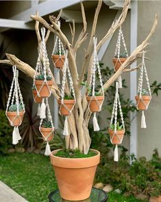 cute is this succulent tree? 💚😍 - - How cute is this succulent tree? 💚😍 – -How cute is this succulent tree? 💚😍 - - How cute is this succulent tree? Macrame Art, Macrame Projects, Garden Crafts, Garden Art, Garden Projects, Container Plants, Container Gardening, Succulent Gardening, Mini Plantas