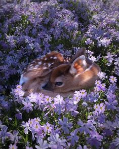 Bambi baby deer in the flowerbed Cute Creatures, Beautiful Creatures, Animals Beautiful, Pretty Animals, Beautiful Flowers, Purple Animals, Beautiful Things, Beautiful People, Nature Animals
