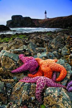 Bryan Peterson, exposure, landscape, sea, starfish, story, depth of field, colors