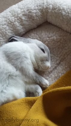 Bunny is sound asleep in his cozy bed:)