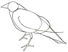 How to Draw a Crow - Draw Step by Step