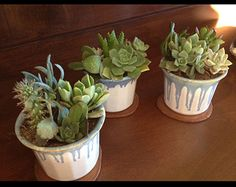 Succulent arrangements of various sizes and colors using treasures that are renewed, reused and recycled