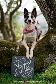 Canines take over the 'Hundred Acre Wood' for a doggy birthday bash Dog Photos, Dog Pictures, Animal Pictures, Family Pictures, Puppy Birthday, Birthday Bash, Birthday Treats, Birthday Cupcakes, The Perfect Dog