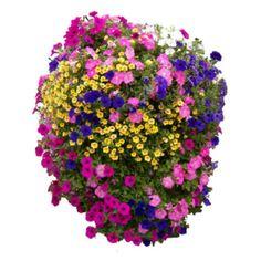 Easy Fill Hanging Basket in full bloom