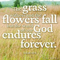Isaiah 40:8 ~ God endures forever.