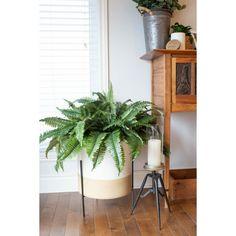 Estate Boston Fern, 44'' - Décors Véronneau Indoor Planters, Planter Pots, Boston Ferns, Agave Plant, Green Plants, White Decor, Artificial Plants, Houseplants, Standing Planter