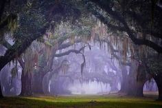 Gorgeous oak lined alley - 11 Eerie Shots In Louisiana That Are Spine-Tingling Yet Magical