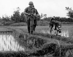 Vietnam War Animals - The use of dogs as an auxiliary in war is as old as war itself. However, their use during the Vietnam War increased. Military Working Dogs, Military Dogs, Military Personnel, Police Dogs, Good Morning Vietnam, Military Drawings, Vietnam War Photos, South Vietnam, War Dogs