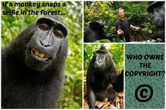 TOUCH this image: Monkey Selfie Lesson by Lesley Karpiuk