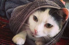 "19 ""Purrito"" Cats Who Are Winning At Life"