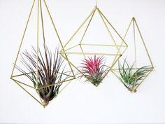 Phytplants.com
