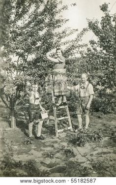 1930s orchard pictures - Google Search