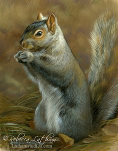 Paintings by international wildlife artist Rebecca Latham. Featuring North American animals, birds, & nature in watercolor painted in miniature. Wildlife Paintings, Animal Paintings, Animal Drawings, Image Elephant, Squirrel Art, Douglas Squirrel, Animals And Pets, Cute Animals, North American Animals