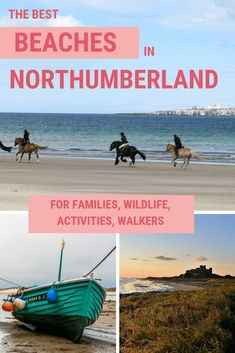 Northumberland is home to more than 30 miles of the most beautiful beaches in the British Isles – almost all of them are dog-friendly. Here's your guide to the best beaches in Northumberland for families, wildlife, adventure and walking! Travel Destinations, Travel Tips, Travel Advice, Travel Uk, Travel England, Beach Travel, Travel Hacks, Travel Packing, Solo Travel
