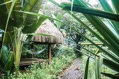 jungle las lajas panama